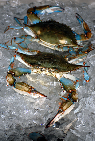 Party Ideas by Mardi Gras Outlet: It's Crab Boil Time